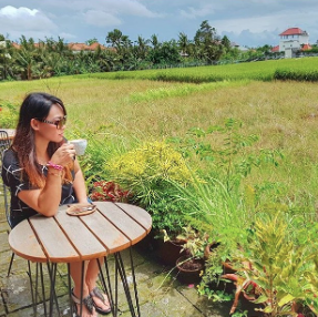 Rice field views at Cafe Cinta