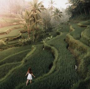 Explore the rice fields in Ubud