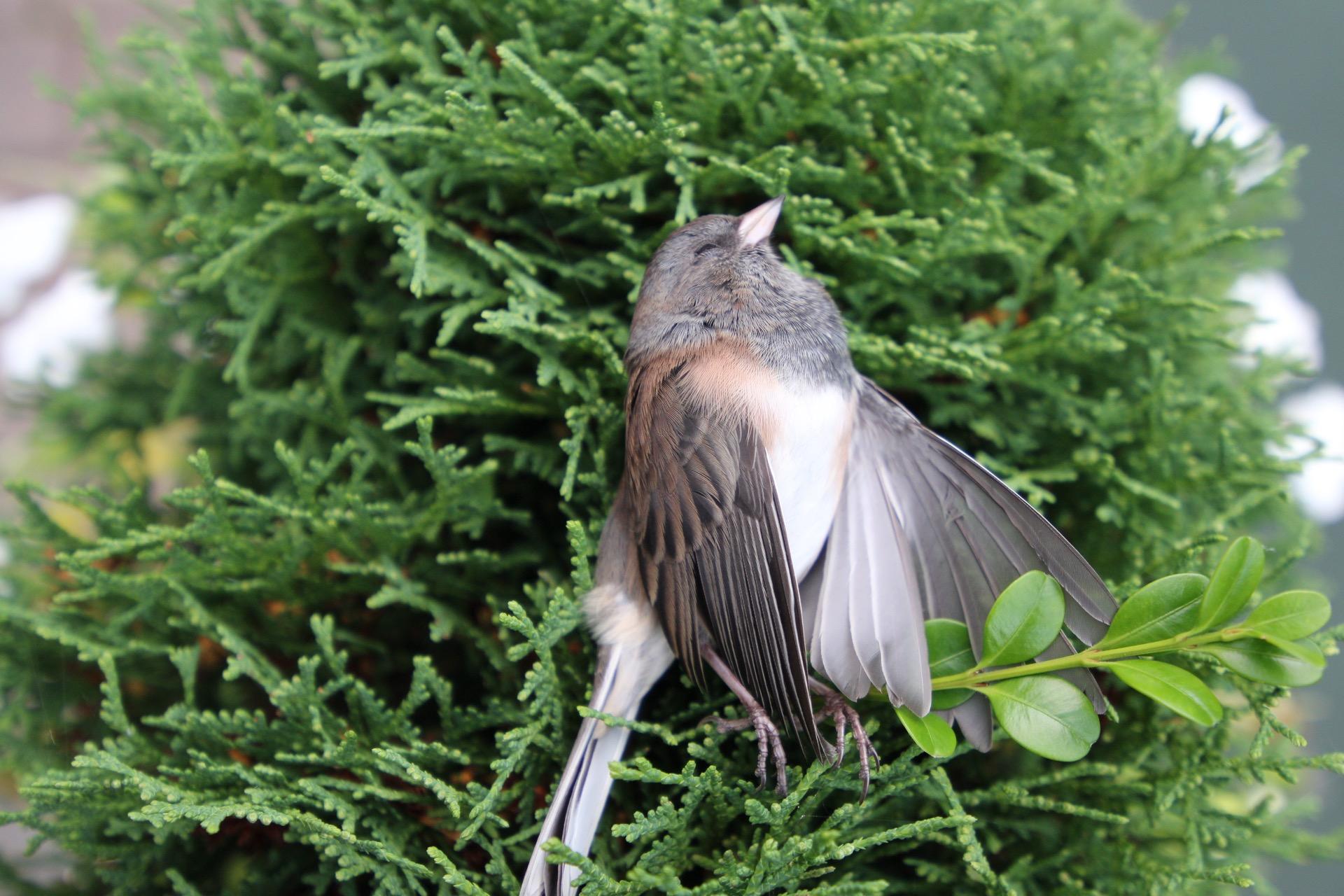 Bird Image OG.JPG