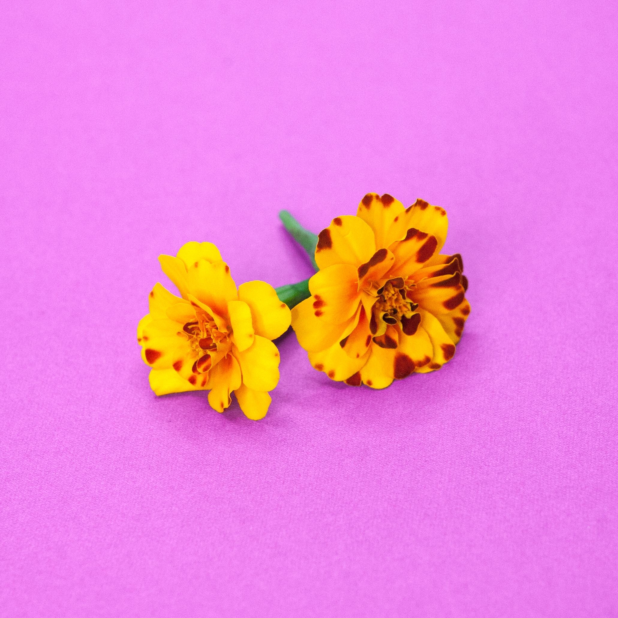 marigold large