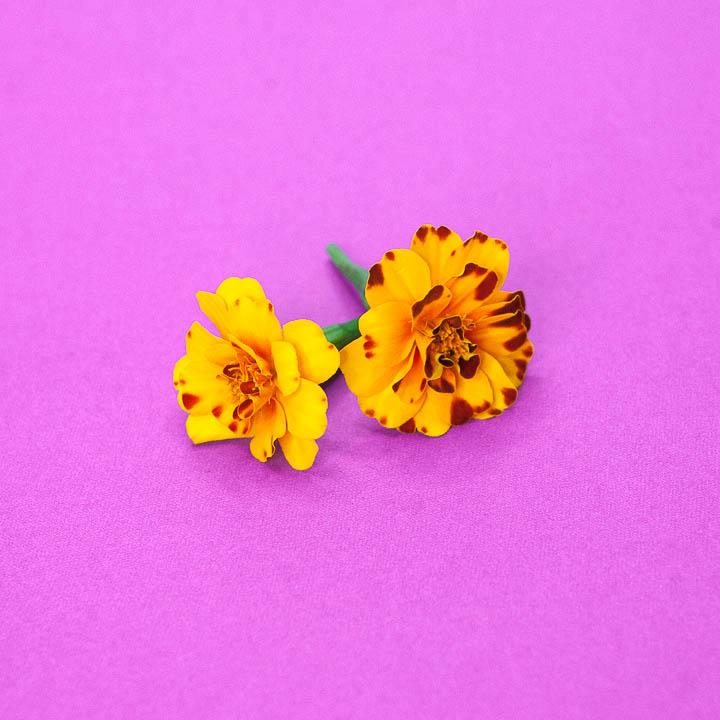 Edible Flowers (Coming Soon)
