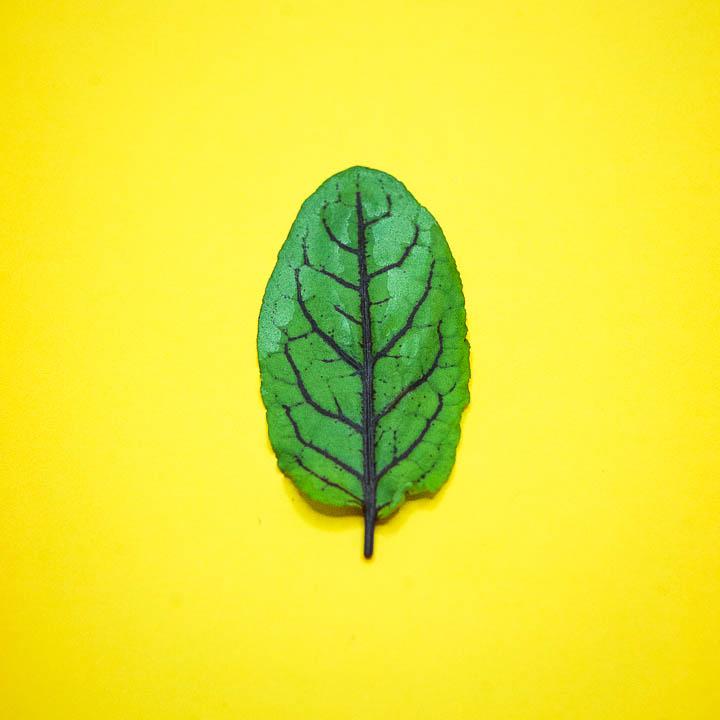 Microgreens & Herbs (Coming Soon)