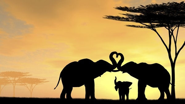 elephants-in-love-at-sunset2.jpg