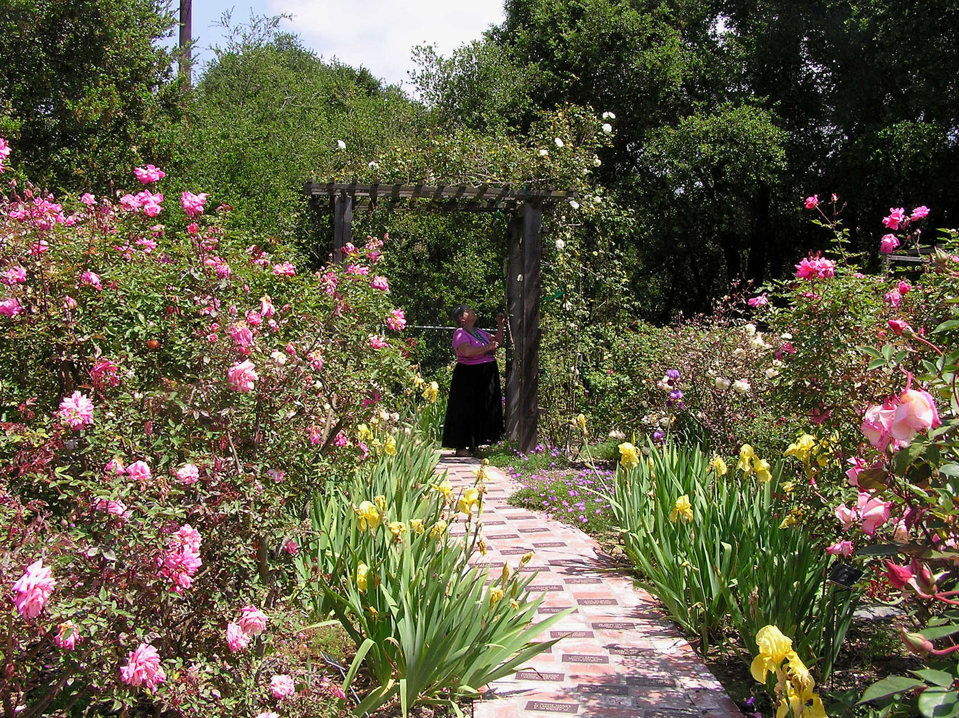 Heritage Rose Garden at the Stagecoach Inn Museum; May 2006