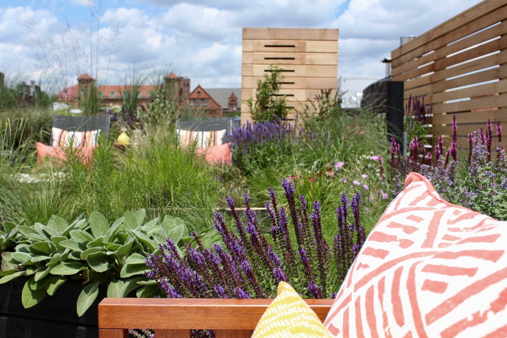 In the future we hope all rooftops will be beautifully  manscaped!  Photo courtesy of Manscapers New York.