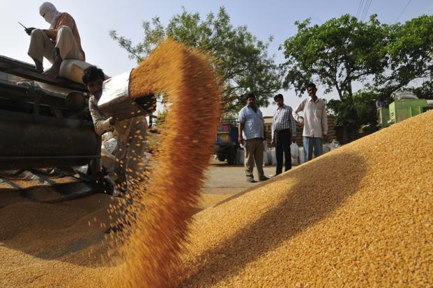 wheat--621x414.jpg