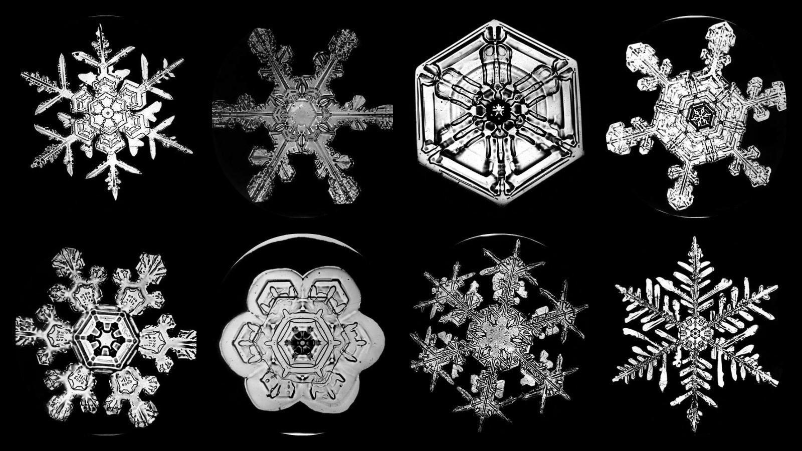8flakes.jpg