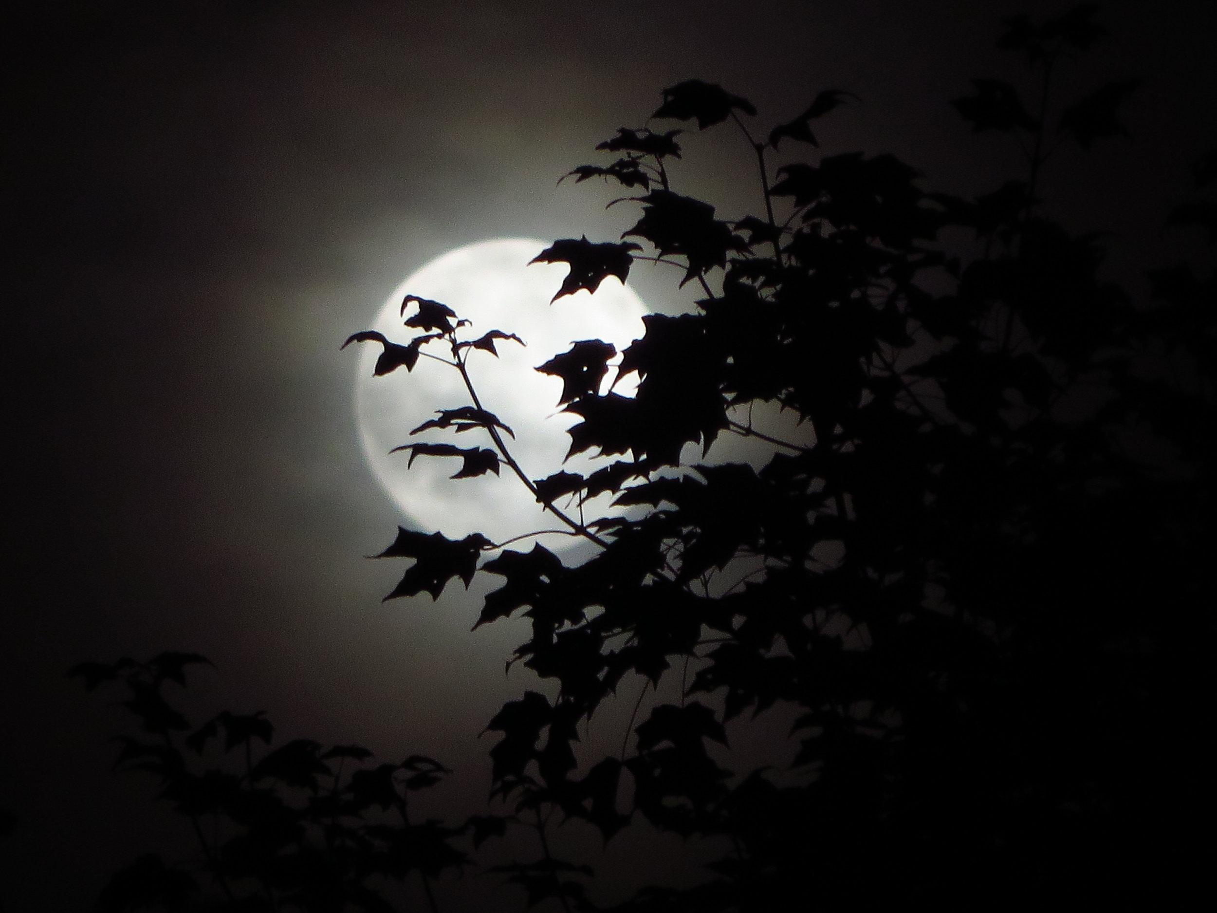 7- moon.JPG