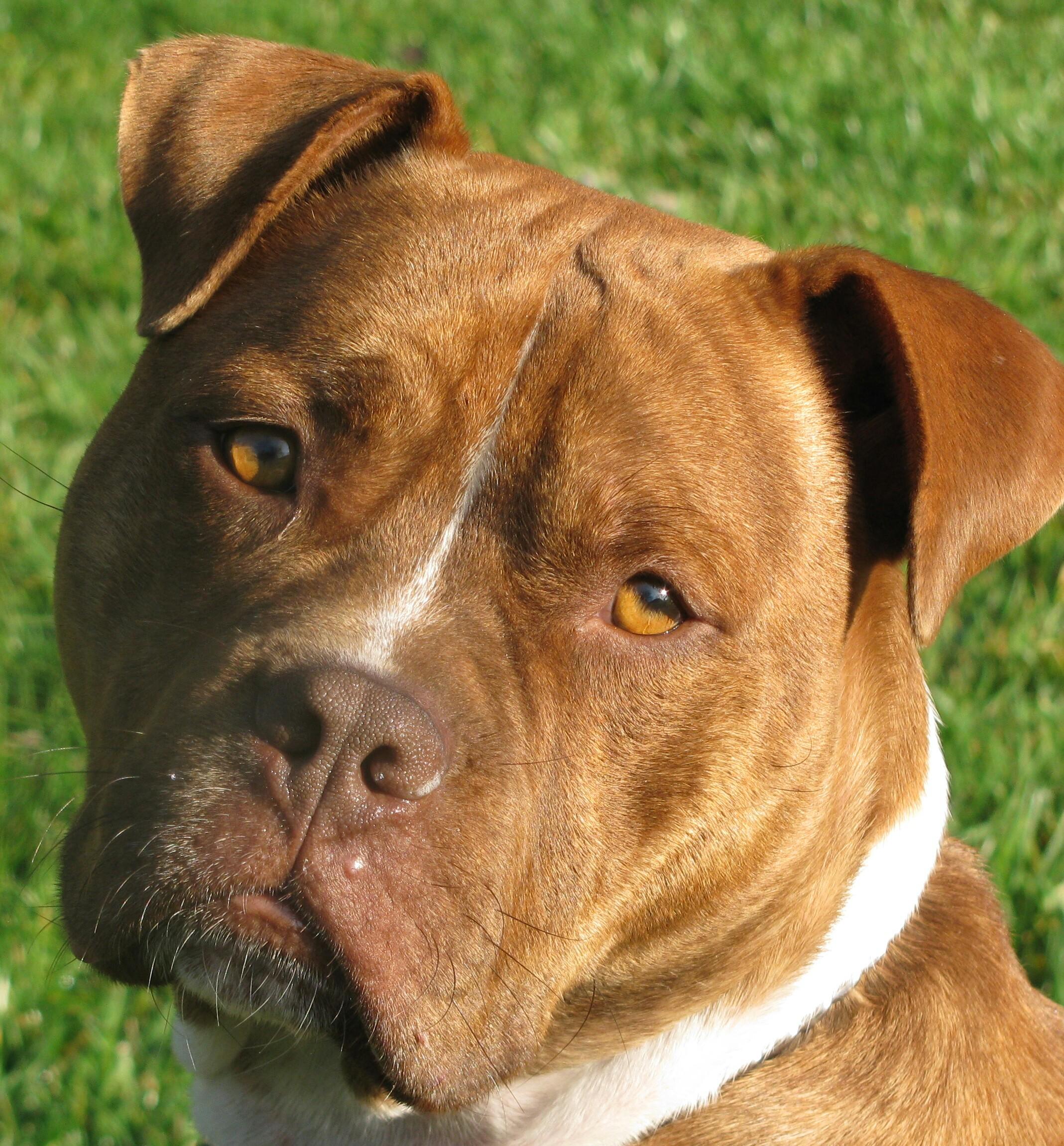 The Beauty of Dogs Hooch