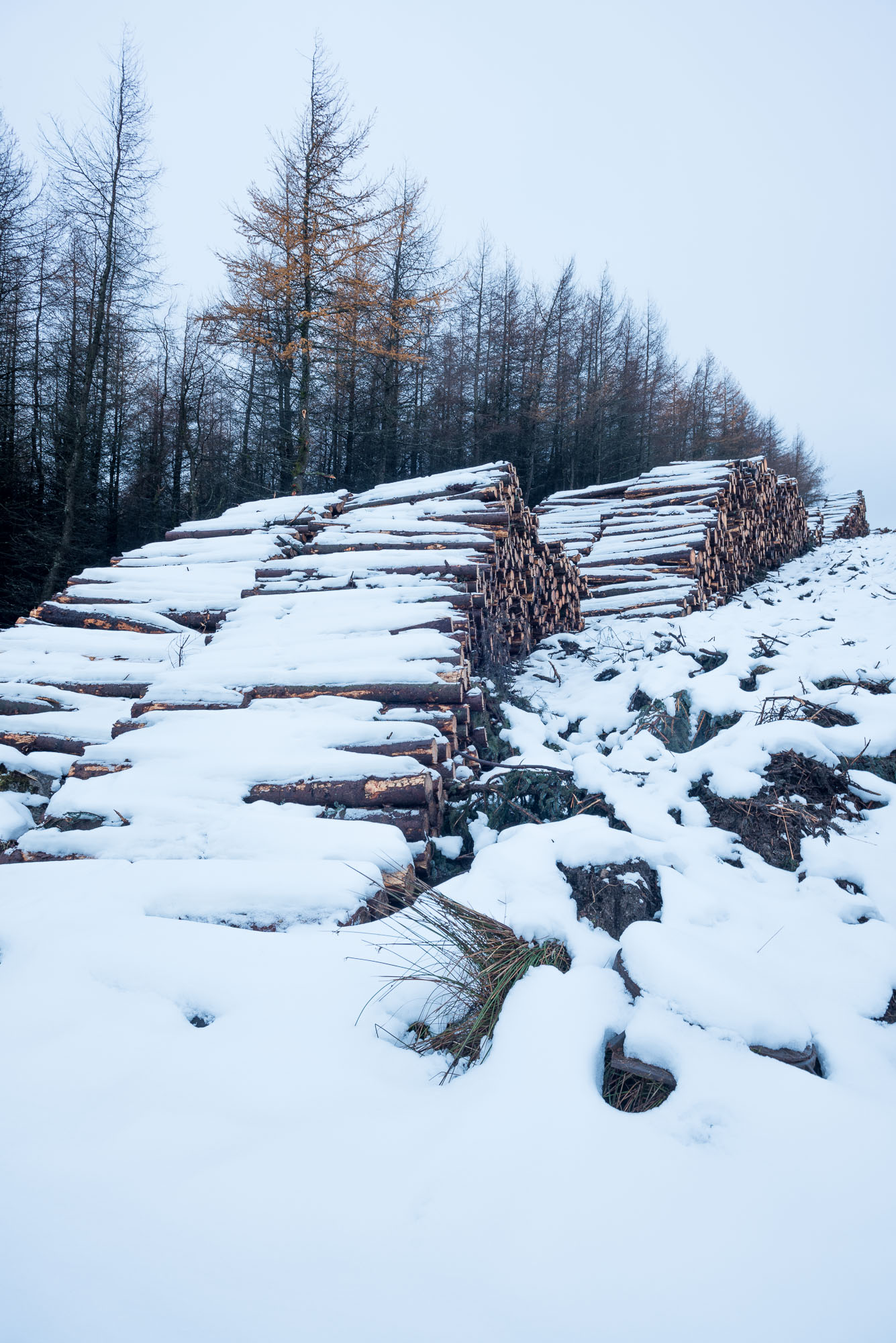 Wood piles in snow