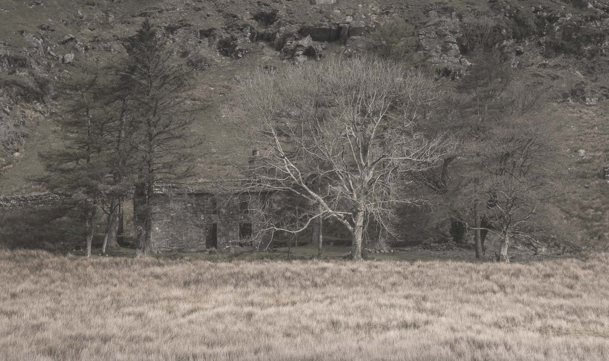 Solitary slate house in trees