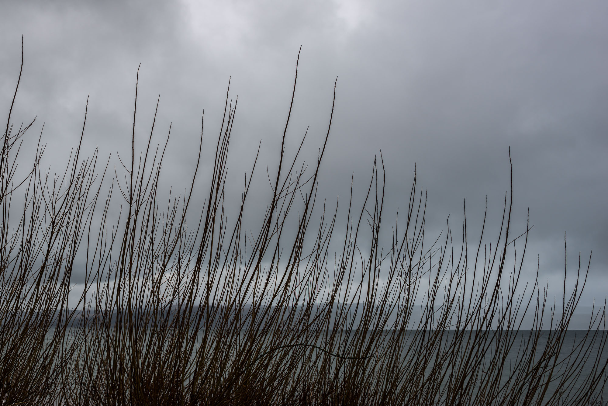 Seashore scrub with cloudy sky