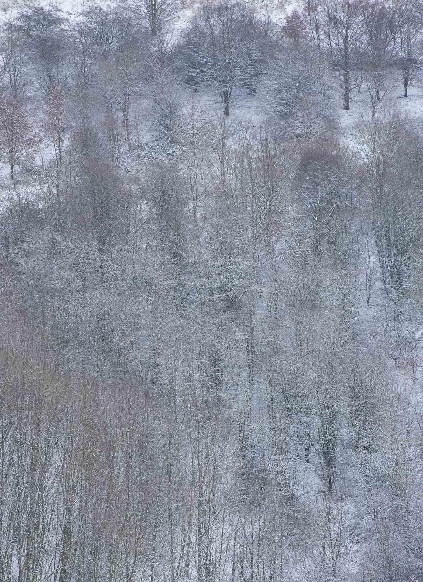 Delicate arboral snow