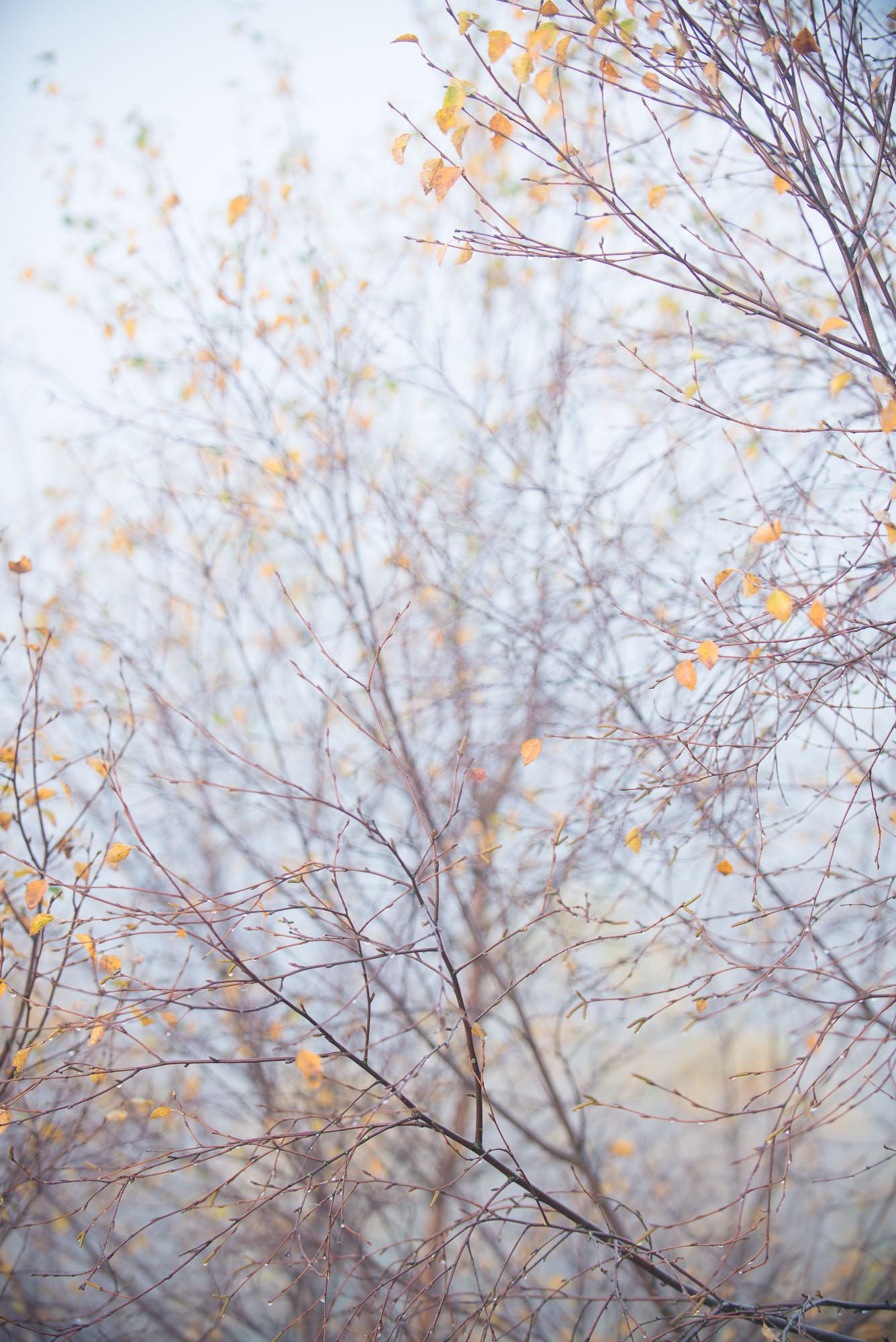 autumn Calder-2.jpg