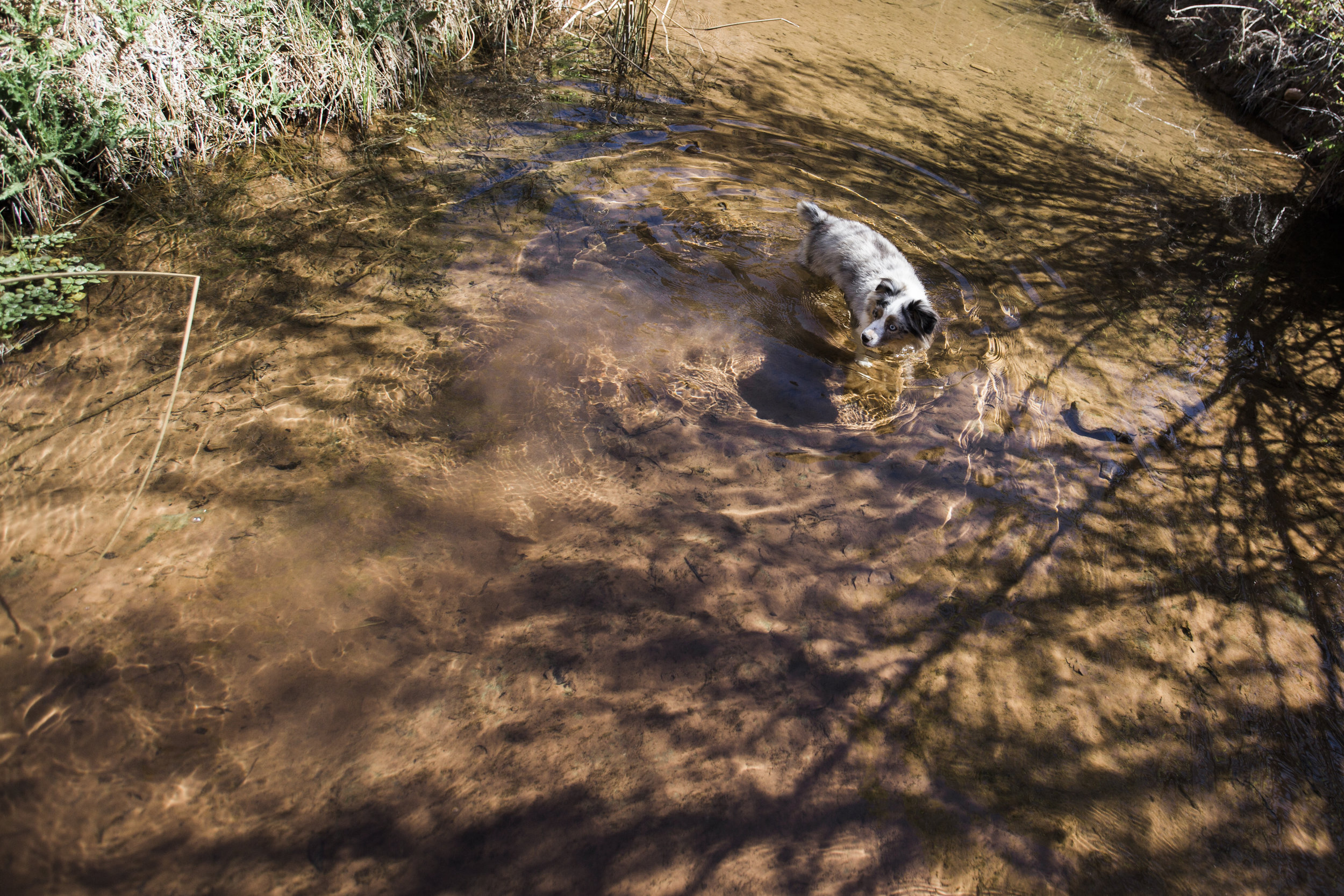 Luna discovered she loved swimming here :) We're pretty sentimental about this memory.