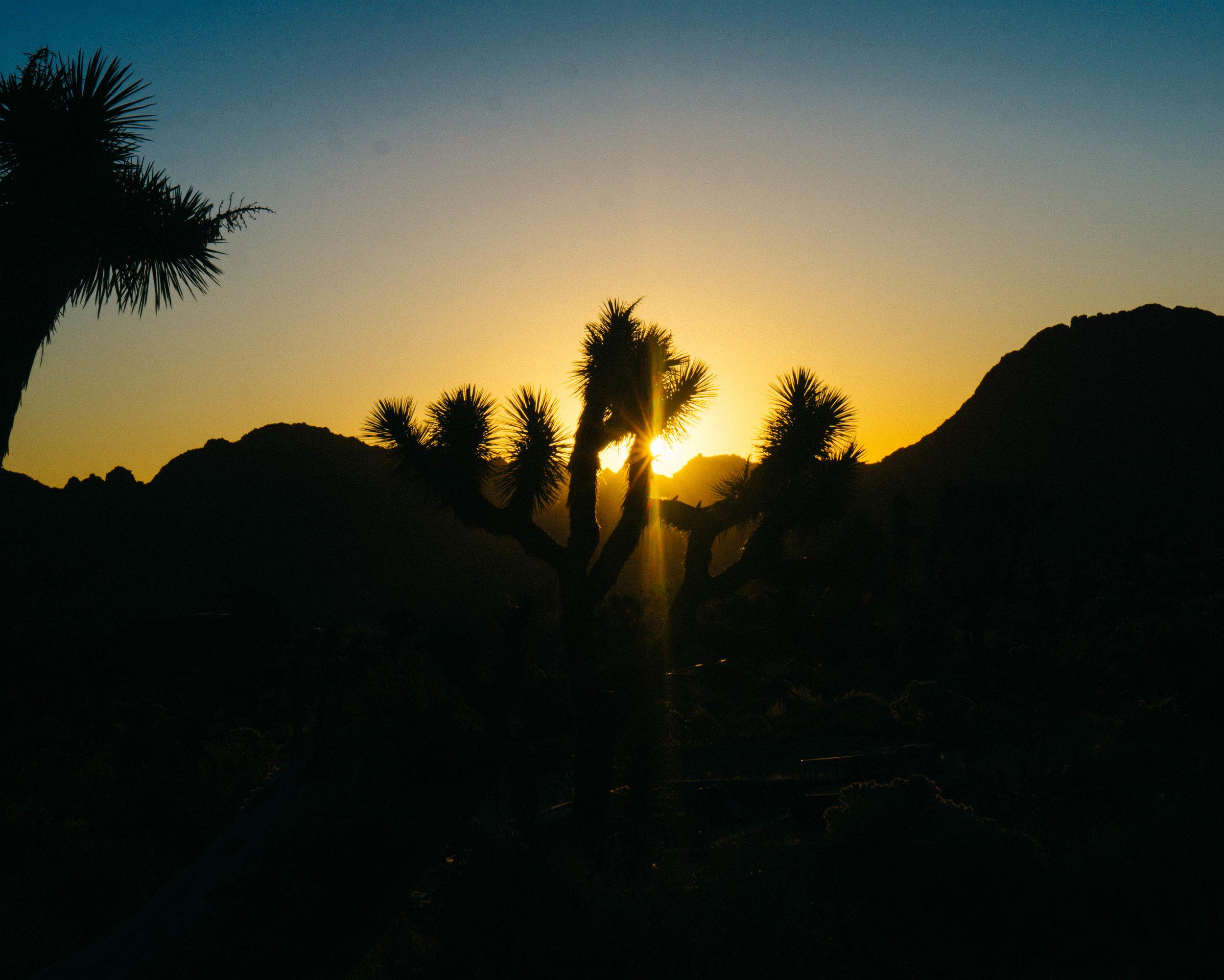 Springtime sunrise over Joshua Tree (5:57 AM!)