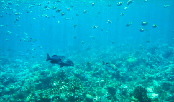 Exploring below the waves in Honduras
