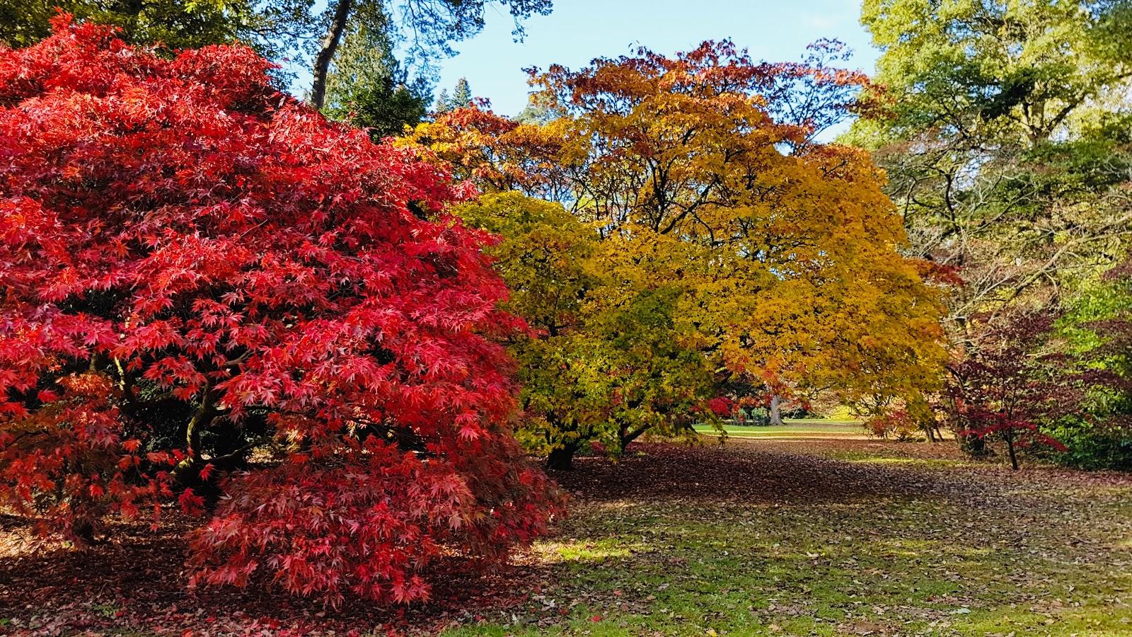 bath this autumn trees.jpg