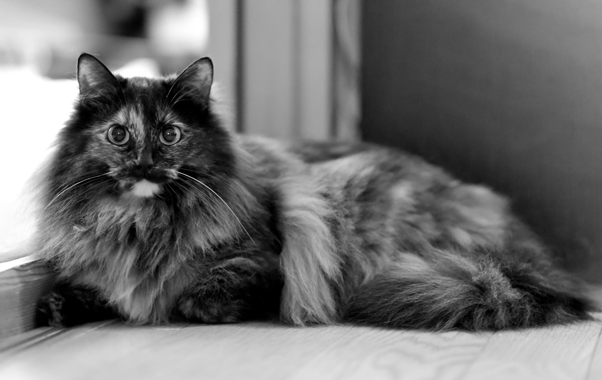 2019_05_14 Shaneys cats 06.JPG