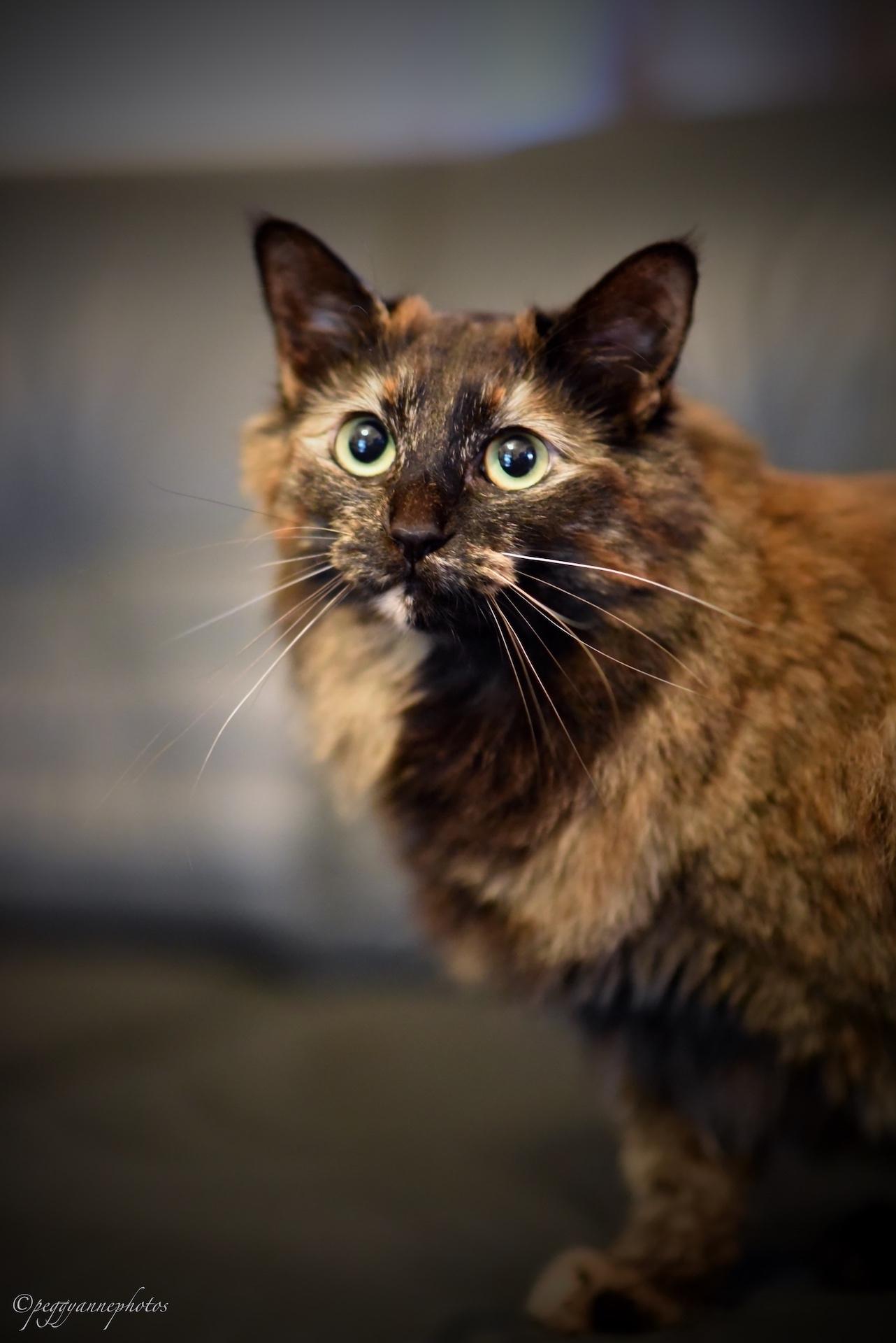2019_05_14 Shaneys cats PCSmall03.JPG