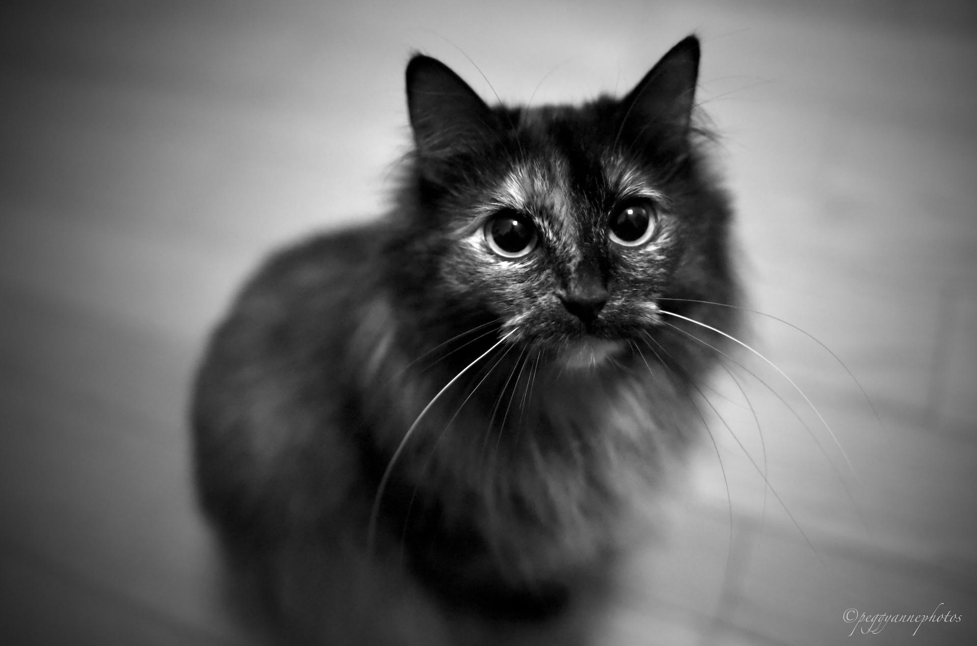 2019_05_14 Shaneys cats PCSmall06.JPG