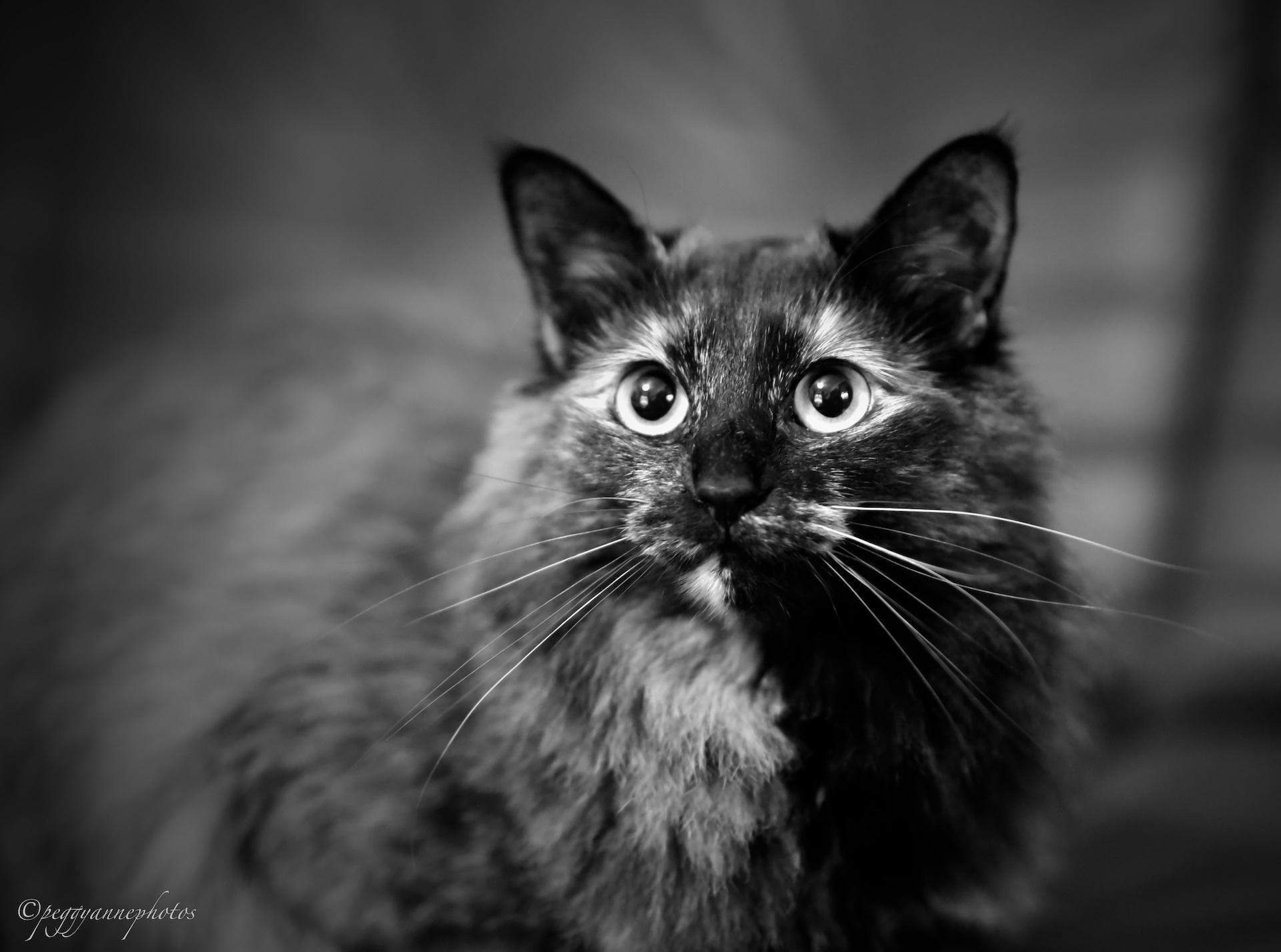 2019_05_14 Shaneys cats PCSmall04.JPG
