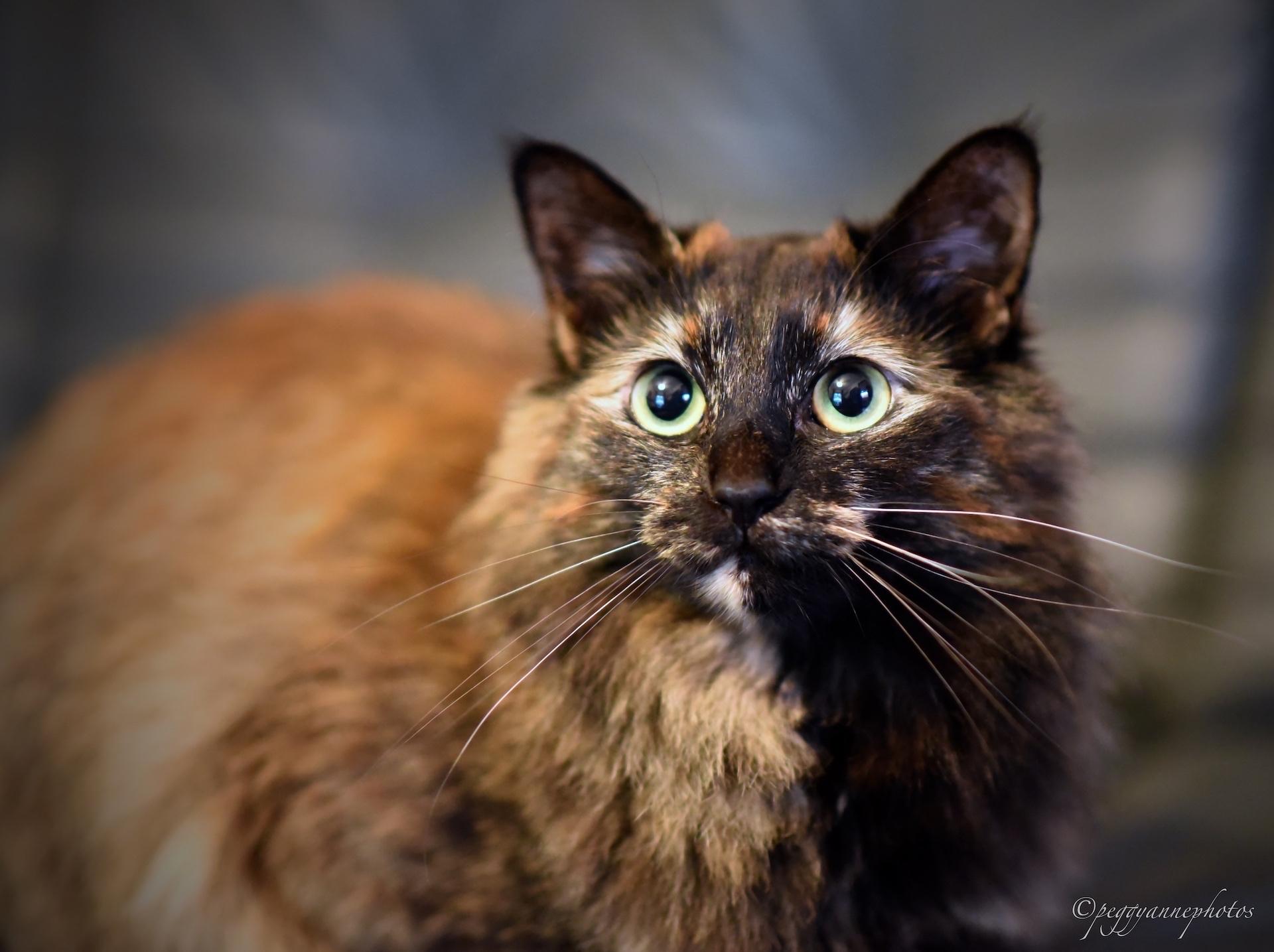 2019_05_14 Shaneys cats PCSmall08.JPG