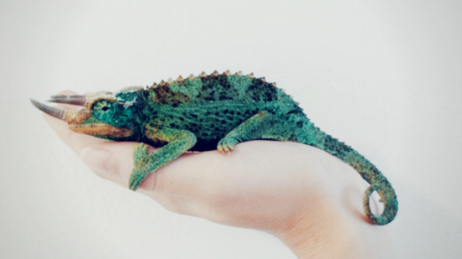 The Christian Chameleon