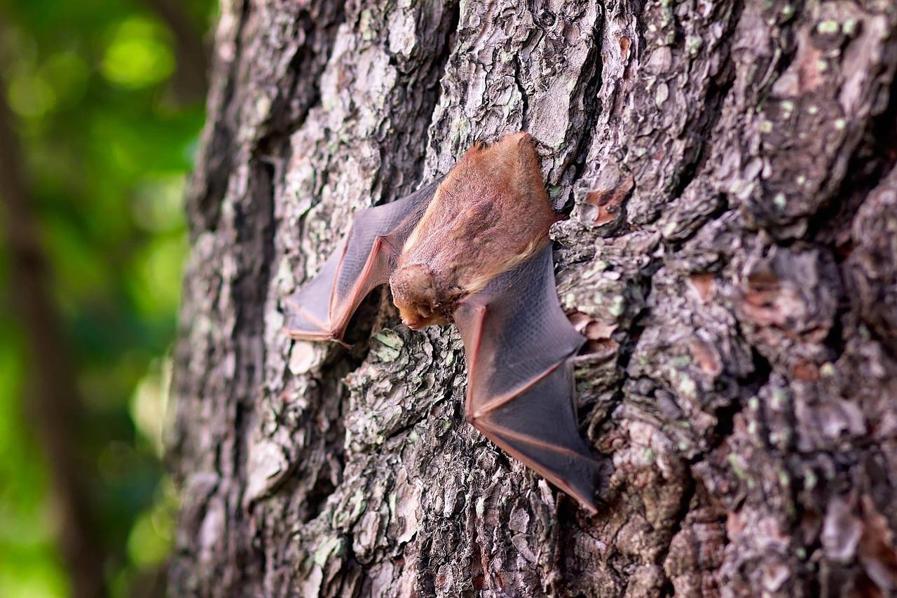 bat-1695186_1280.jpg