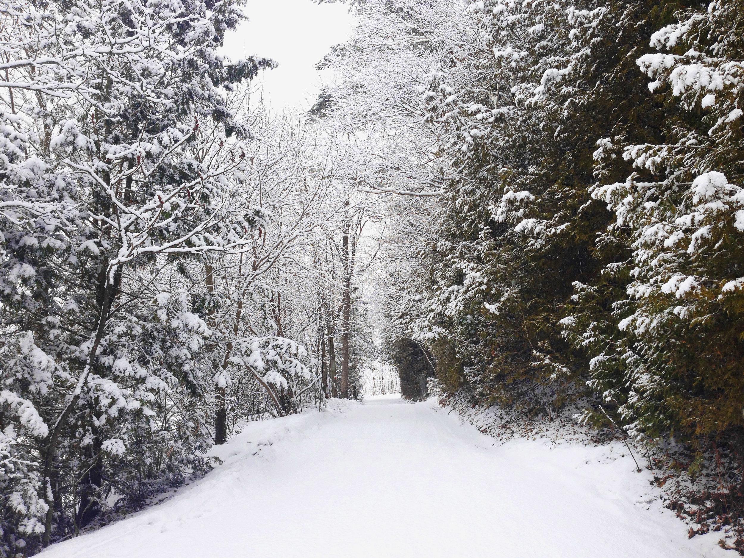 drive winter.jpg
