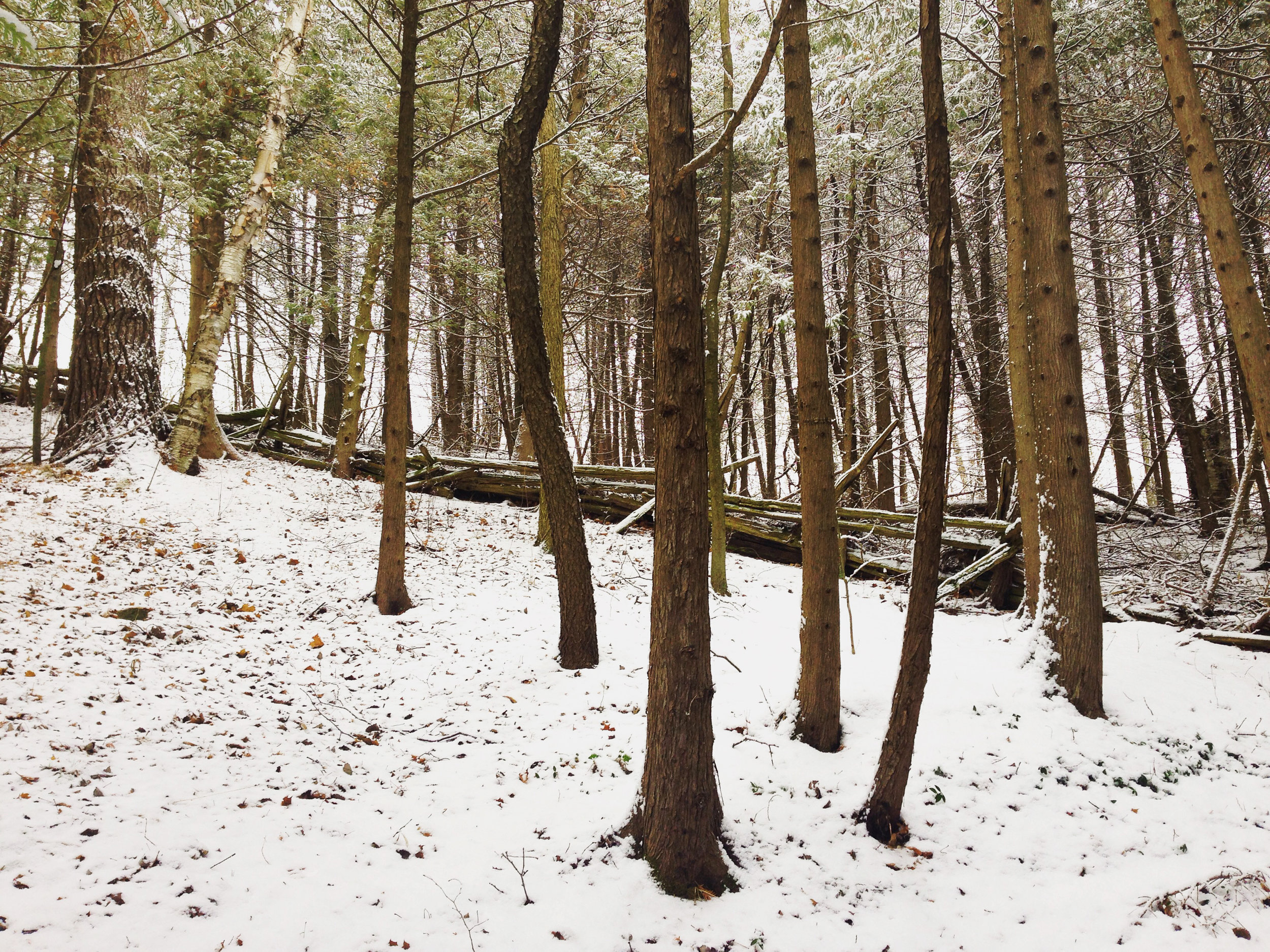 hill forest.jpg