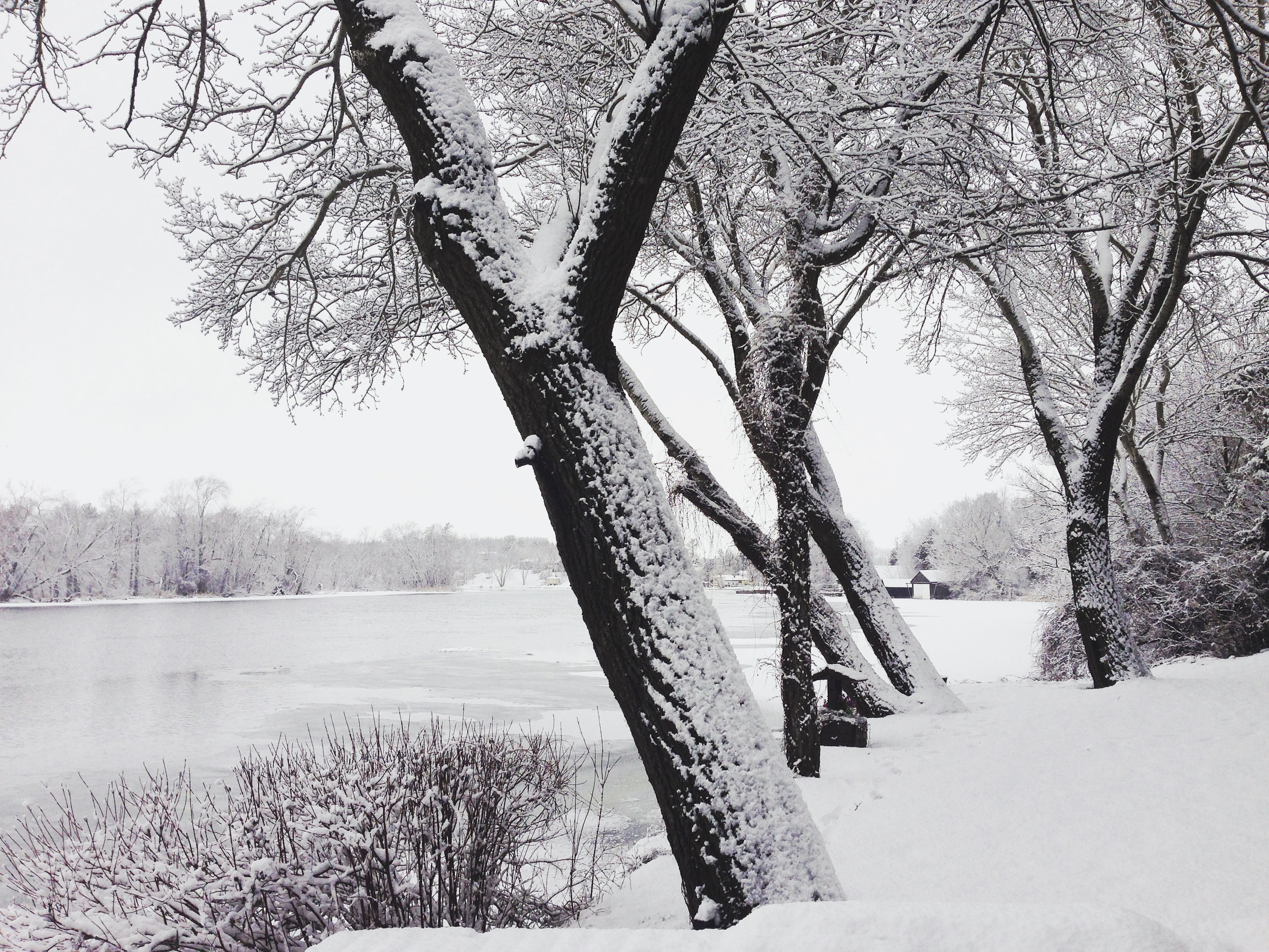 lawn winter 1.JPG