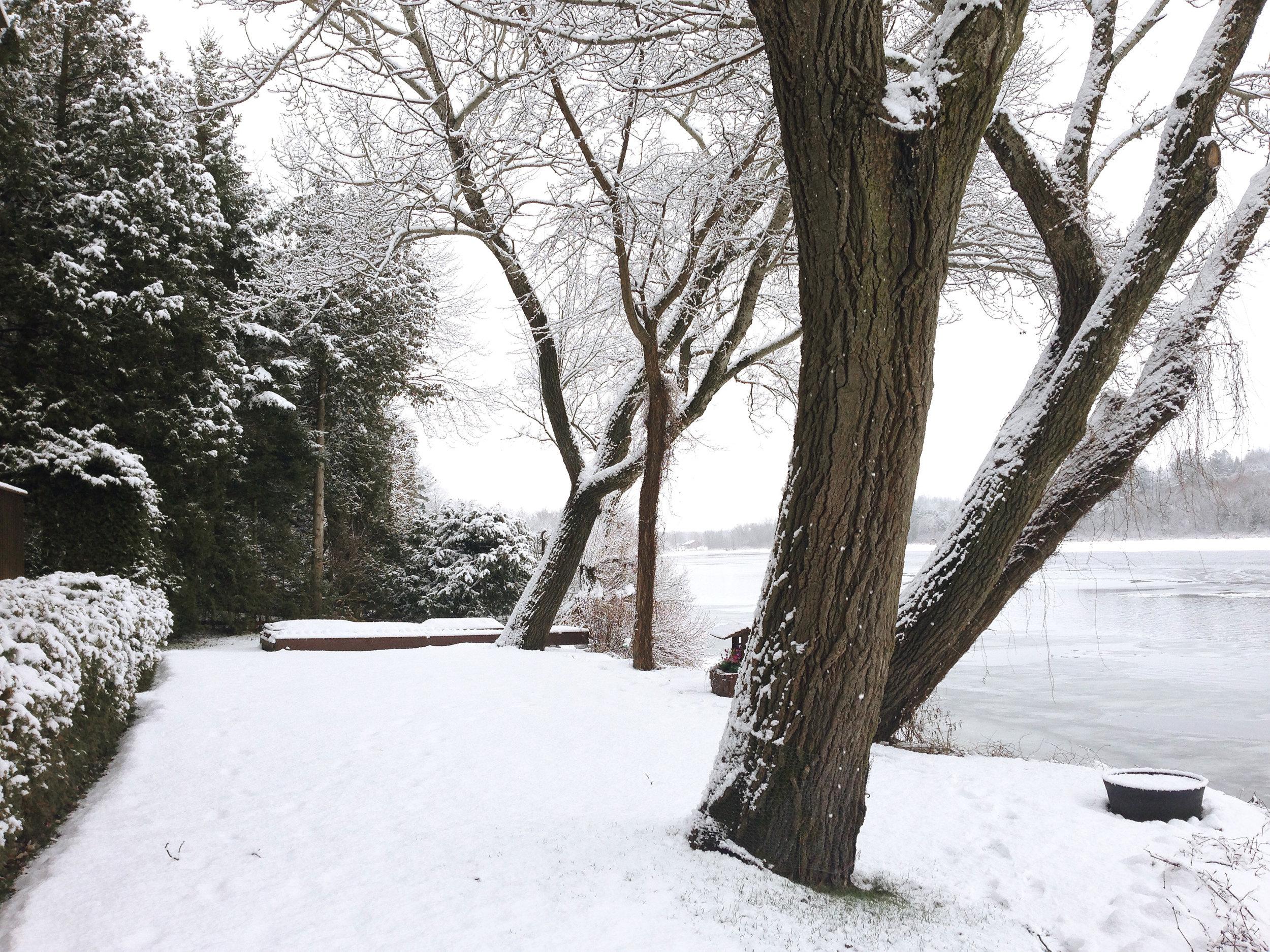 lawn winter 2.jpg