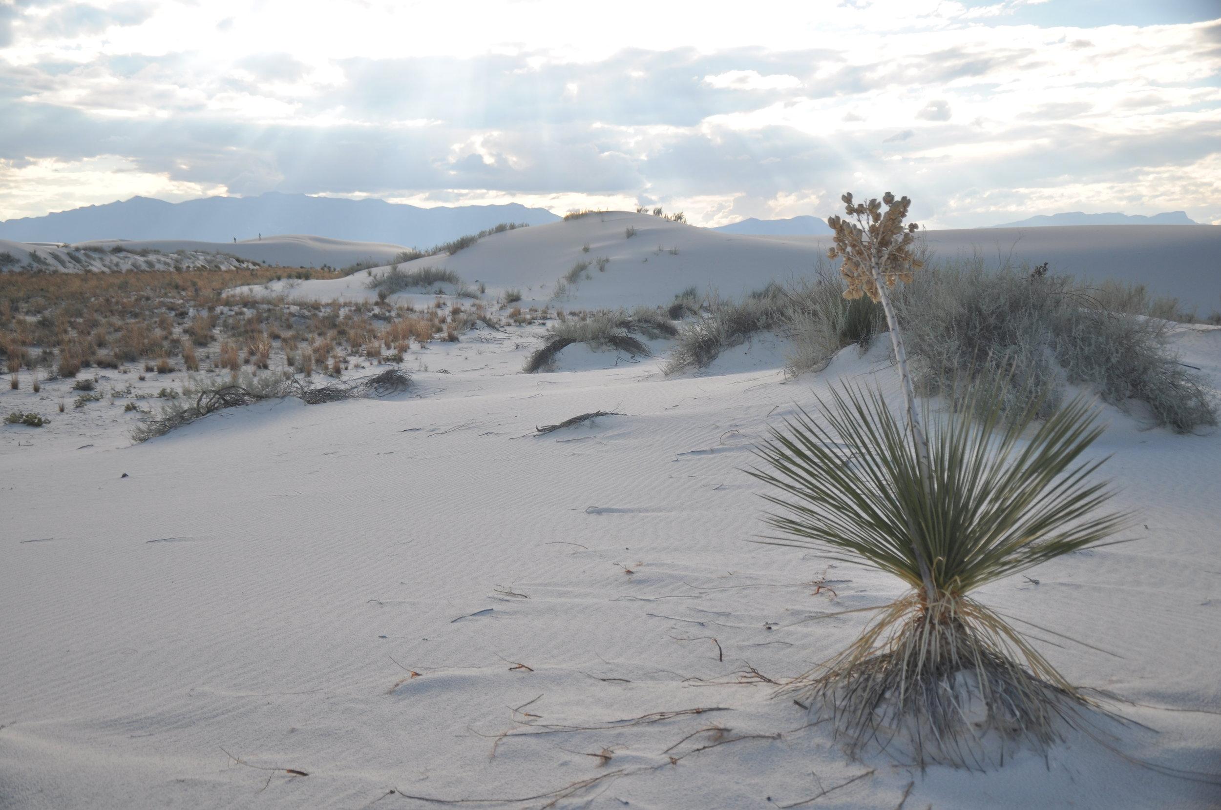 White Sands by Alamogordo