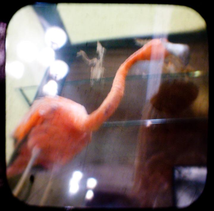 Flamingo and Skeleton