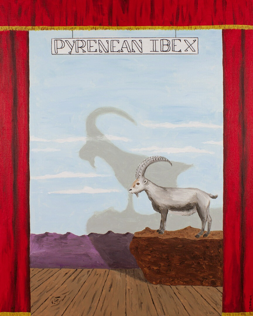 Extinct Animal #4 Pyrenean Ibex