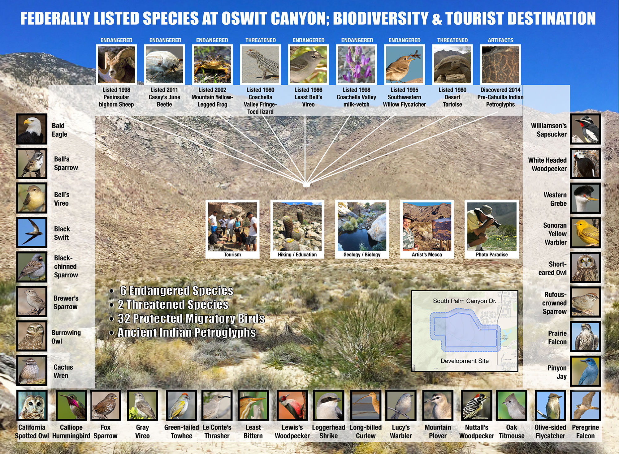 This graphic shows the diverse species list of flora and fauna found in this alluvial fan.  Species source: US Department of Fish and Wildlife; 2016.