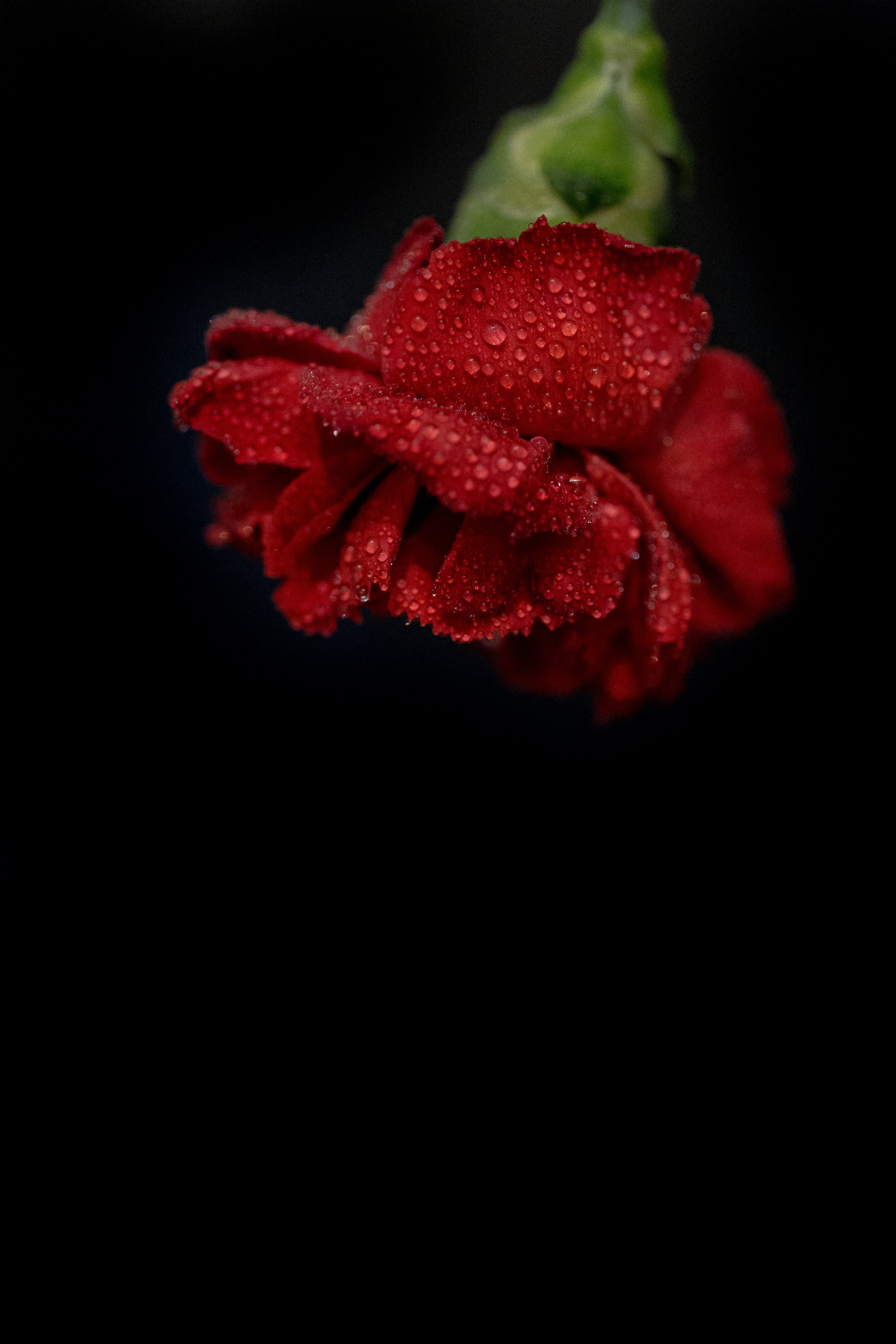 Macro floral photo