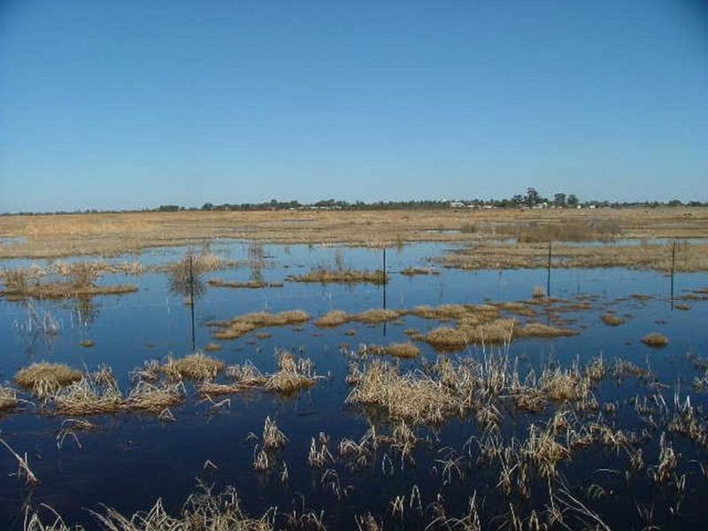 Fivebough Wetlands.jpeg