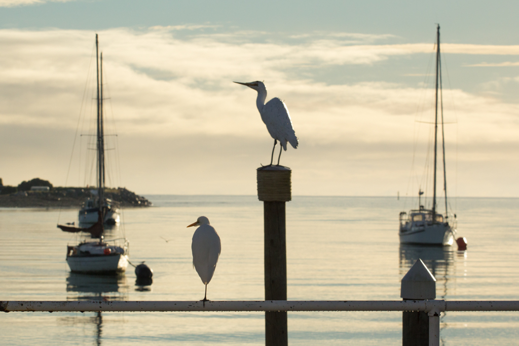 Mapua is centred around the Wharf - galleries, bars and restaurants