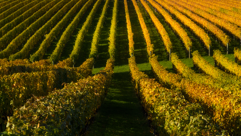Blackenbrook Wines produce six wine varietals in their sustainable family-run vineyard