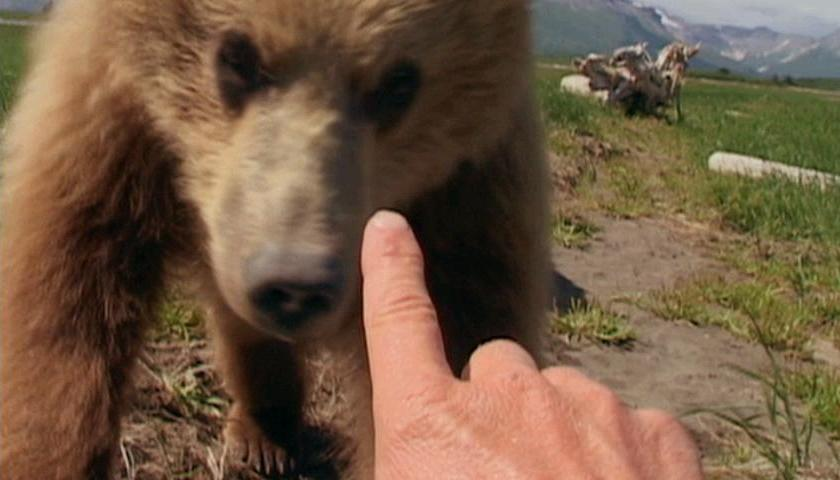 grizzly-man-with-the-bears-2-1ycuv2a.jpg