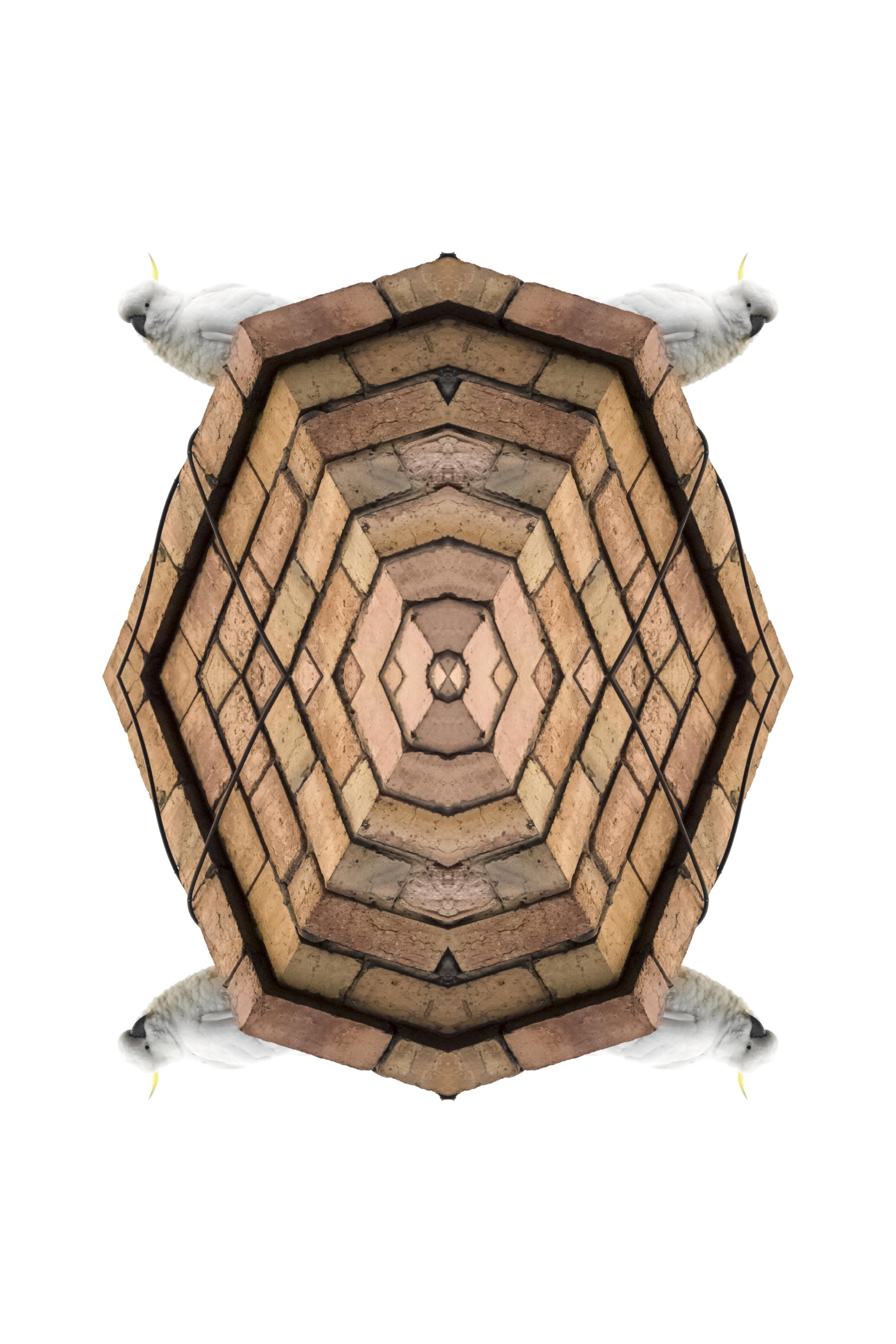 Sulphur-Crested Cockatoo,  2017  Archival print on cotton rag paper  150 x 100 cm