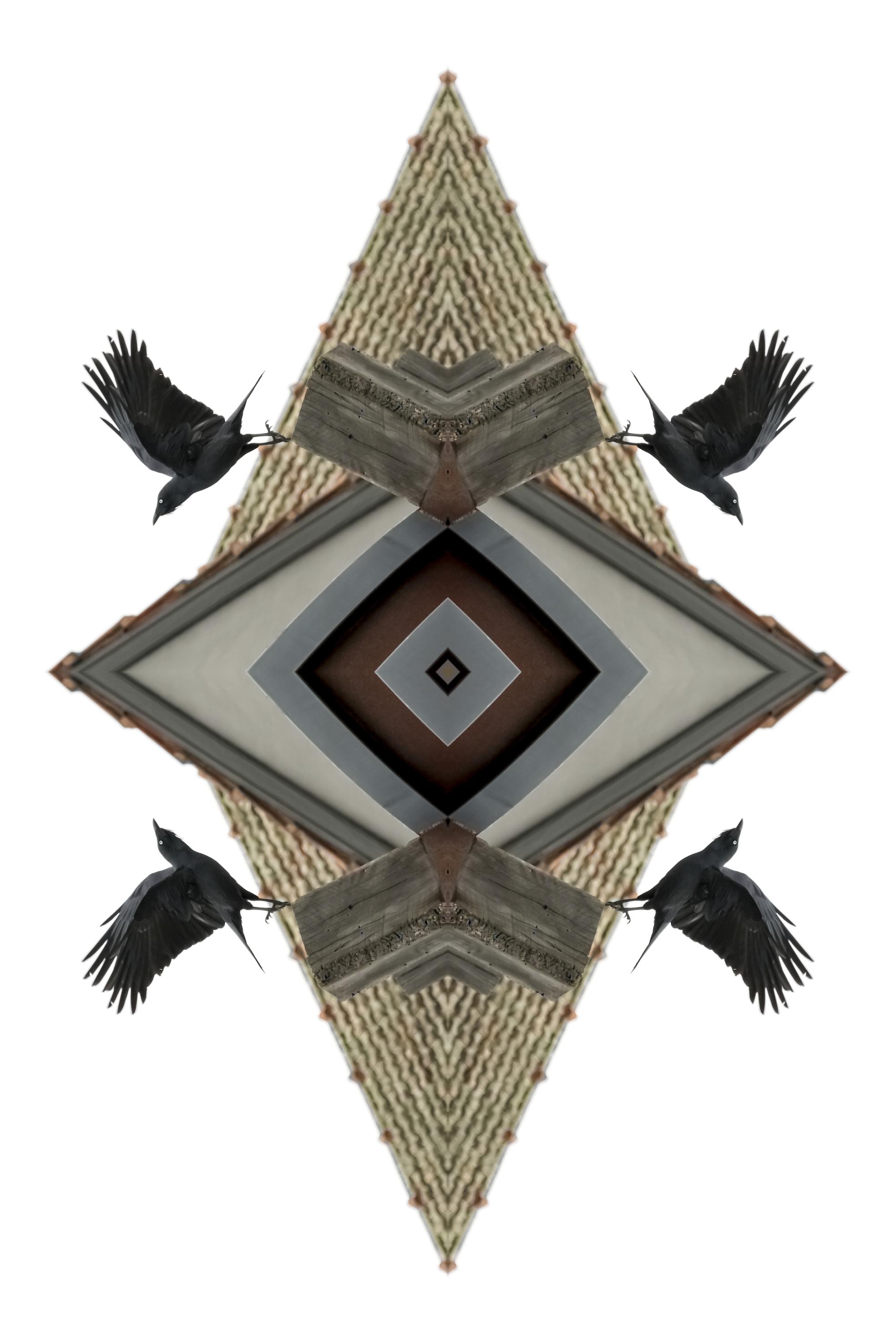 Crow,  2017  Archival print on cotton rag paper  150 x 100 cm