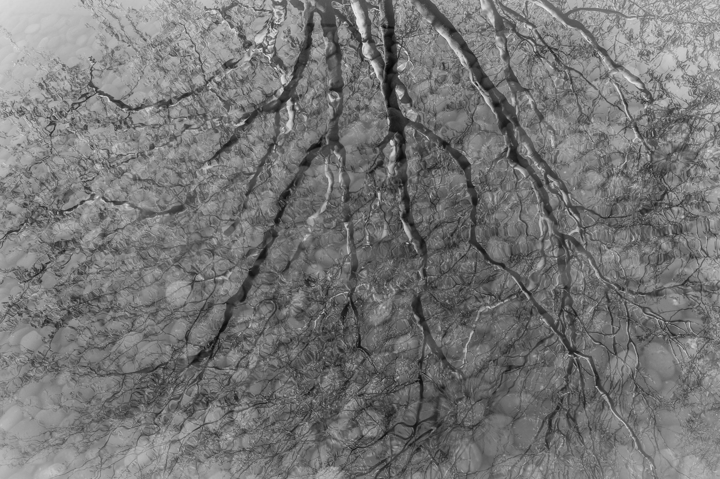 Water Tree-2.jpg