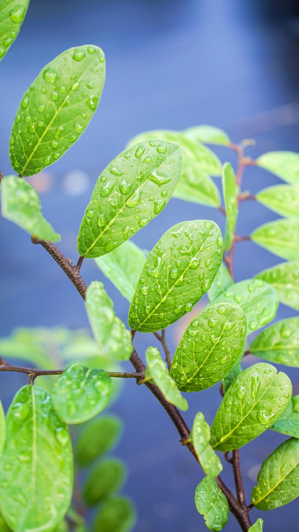 Plant Creations Nursery-66.jpg