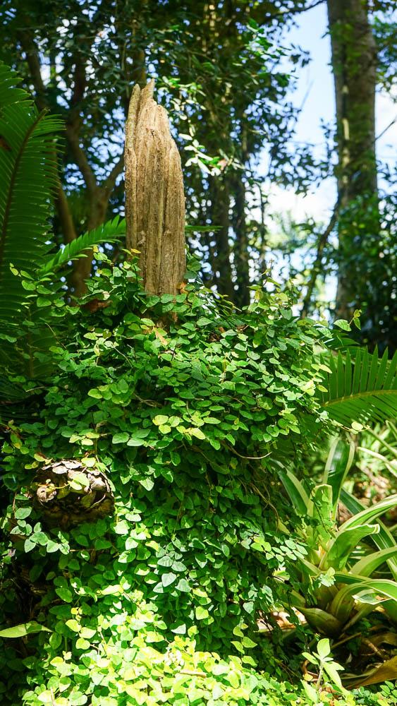 Plant Creations Native Plant Nursery Landscape