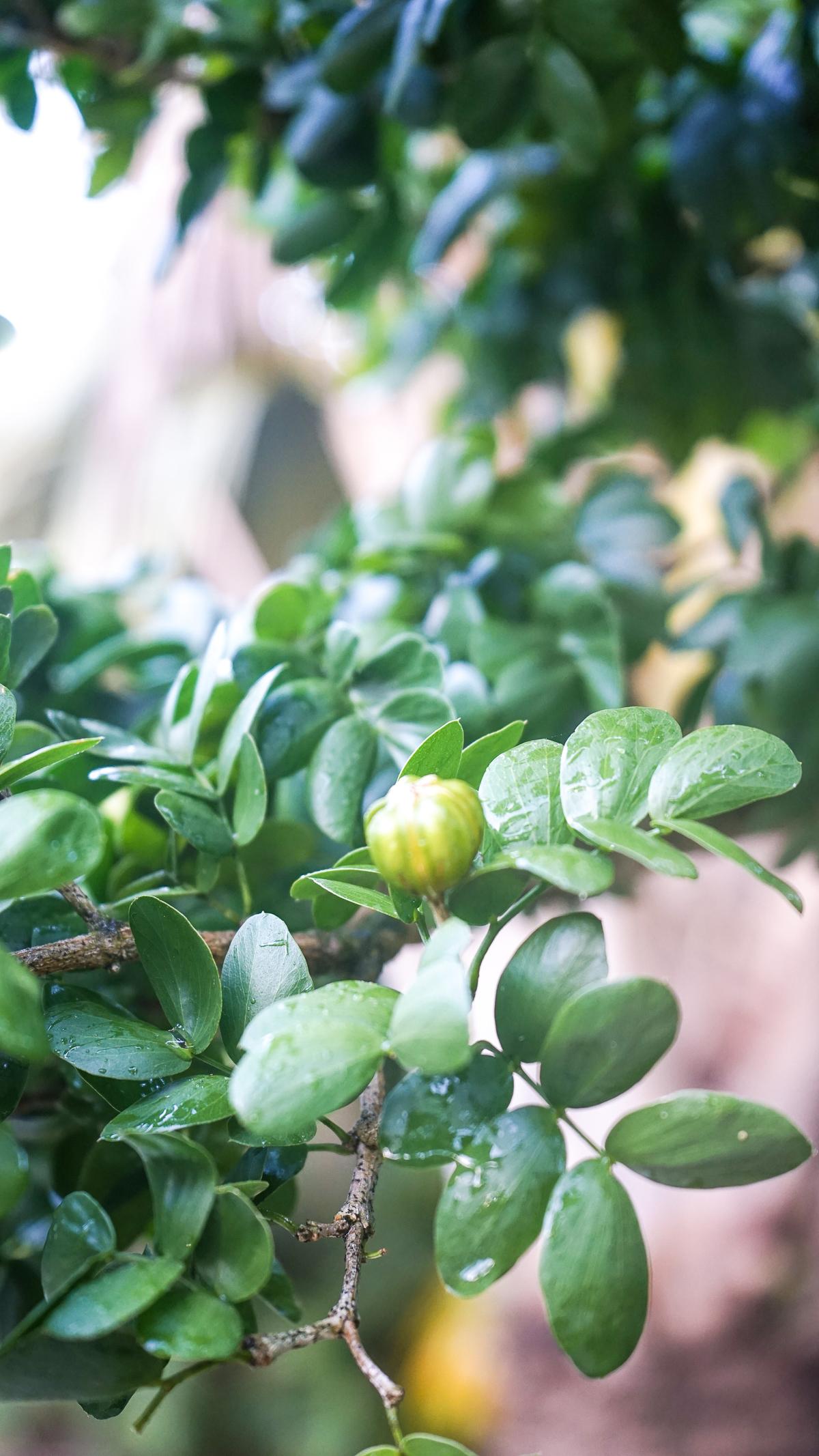 Plant Creations Nursery-16.jpg
