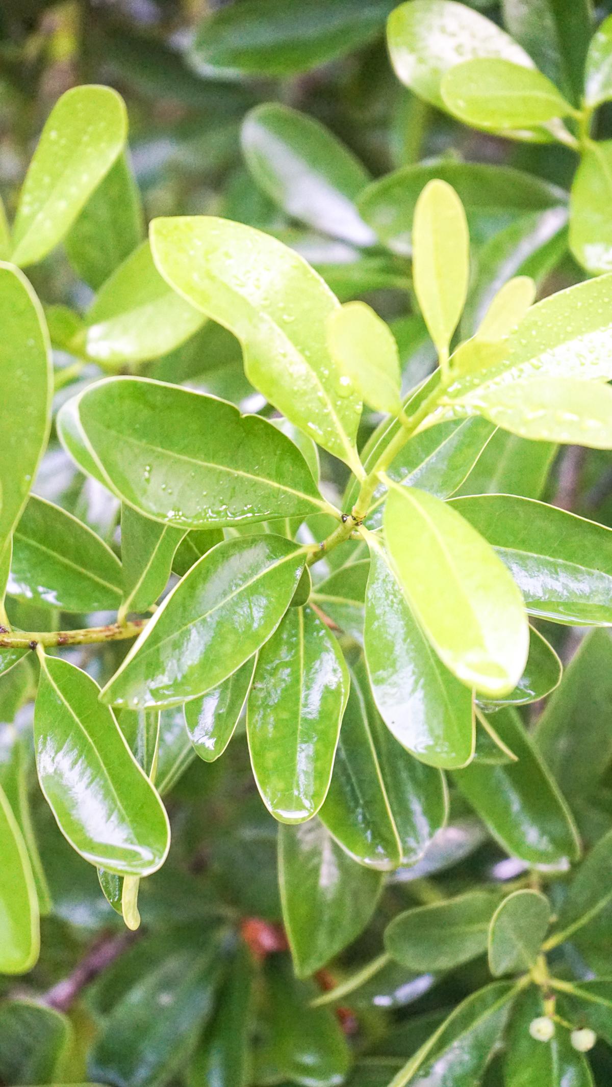Plant Creations Nursery-26.jpg