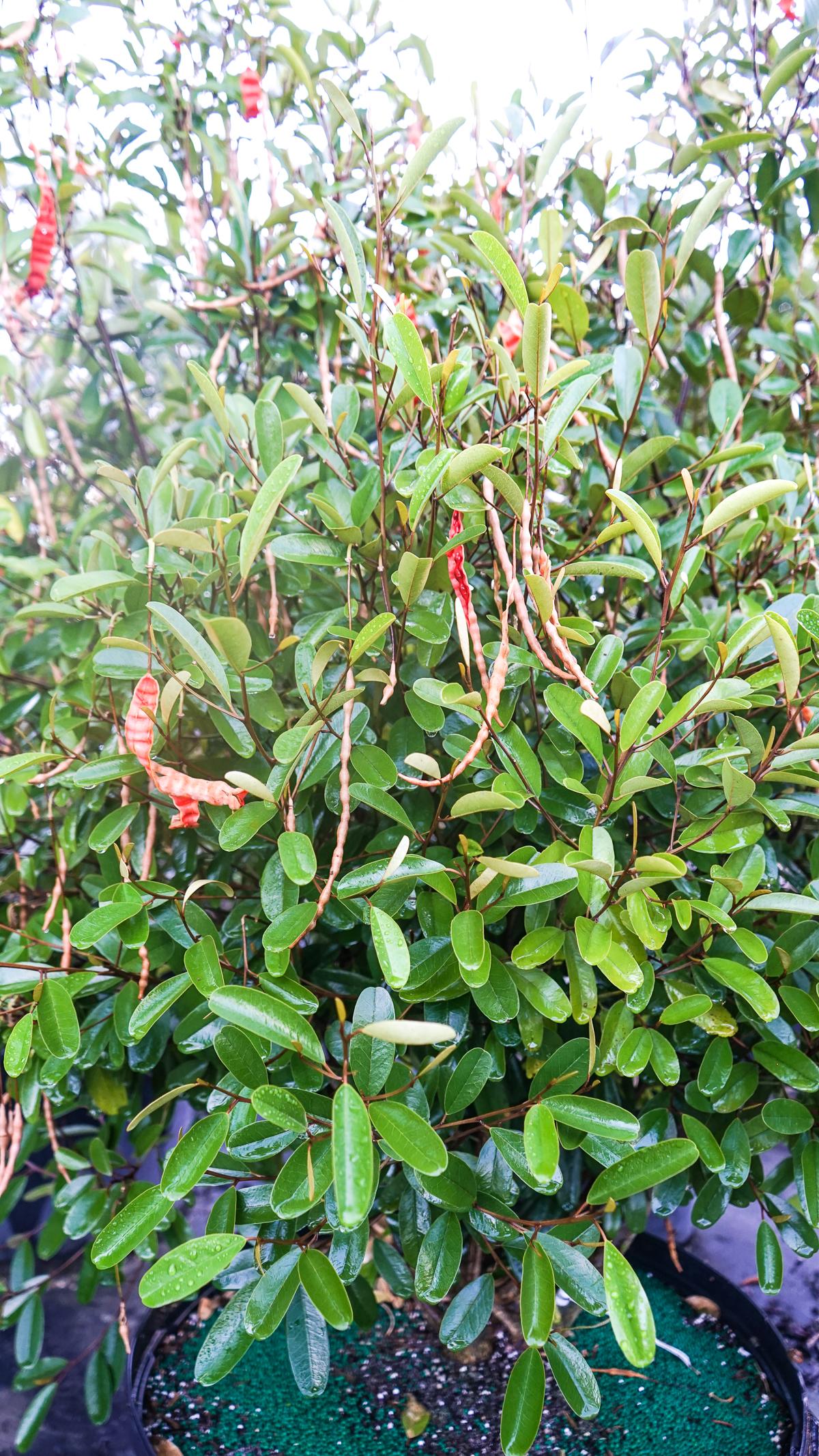 Plant Creations Nursery-34.jpg